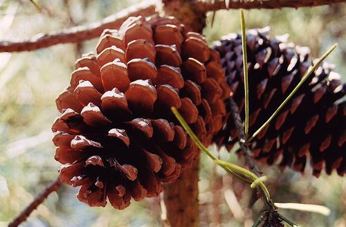http://leelou32.l.e.pic.centerblog.net/w5yzb4kj.jpg